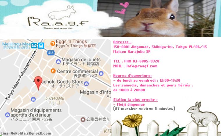Ra.a.g.f(ラフ)うさぎと遊べる専門店