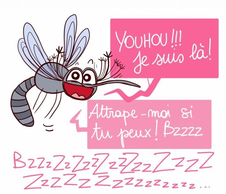 Les moustiques !!!