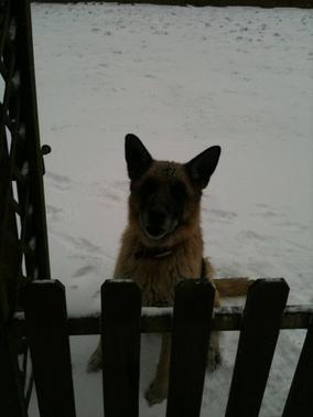 Mon amour de chien <3
