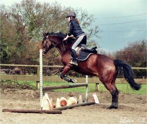 L'équitation .. Un paradis que certaines personnes ne voient pas .. ` ♥