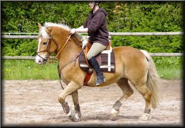 L'extérieur du cheval exerce une influence bénéfique sur l'intérieur de l'homme.