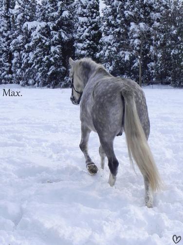 Bienvenue sur le blog officiel de mon poney Max