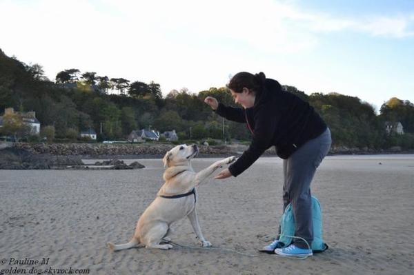 Catégorie : Canin ~ Pseudo : Génouki -  Titre : Génoise et Chouki.