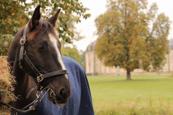 ► Horse-ofdream - L'histoire d'une cavalière. Catégorie : Equin ~