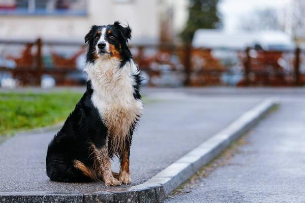 ► HannaBarbera-WallyGator Catégorie : Canin ~