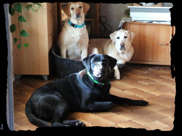 ► Lovenoise - Génoise & Loven Catégorie : Canin ~