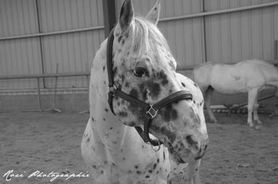 """"""" Le cheval est la plus belle conquête de l'homme...Mais c'est toi qui à conquis mon coeur."""""""