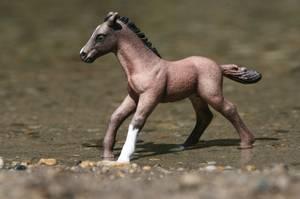 """"""" L'air du paradis est celui qui souffle entre les oreilles d'un cheval """" (2/2)"""