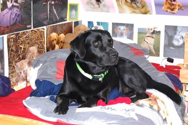 « Si un chien monte sur votre lit, c'est qu'il apprécie votre compagnie. »