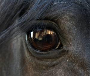 L'Equitation est un sport ♥♥
