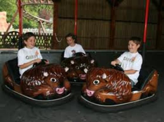 les bisons futés