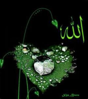 I LIKE ALLAH!!!!!
