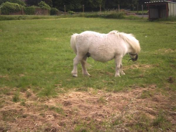 voici un poney qui est dans ma ville