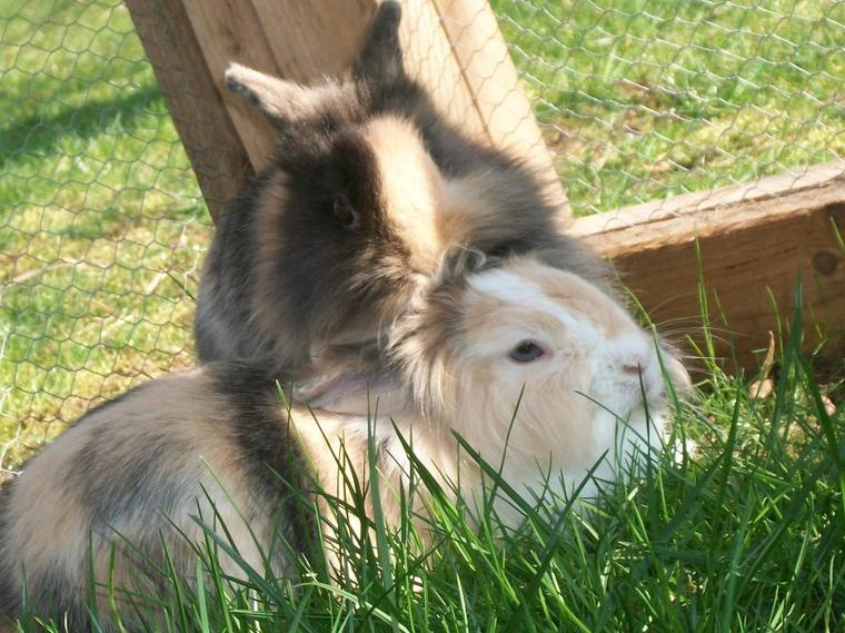 7.Juste parce que tu étais un lapin extraordinaire, partit trop tôt.♥