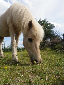 Etre avec son poney dans le pré un vrai bonheur ♥