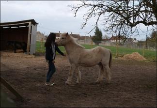 Regardez un cavalier sans son cheval il lui manque la moitié de son sang ♥