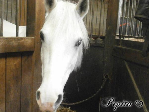 Tu me manque Pépita..♥