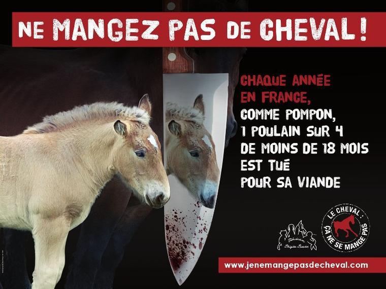 Ne mangez pas de cheval!!!!
