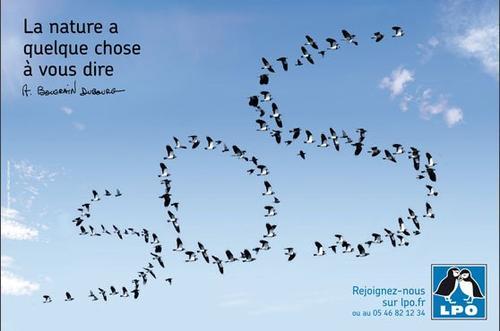 Présentation de l'association : LPO et doc sur la biodiversité