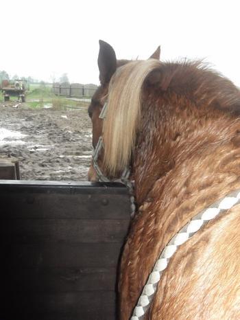 L'équitation est un sport! ♥