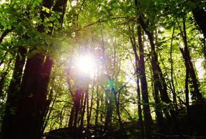 Les arbres se déshabillent de leur couleur verte pour se vétirent de couleurs vivent et ocre. de moi