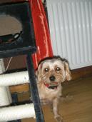 les chiens qui sont vneu passez un petit ou long séjour chez nous