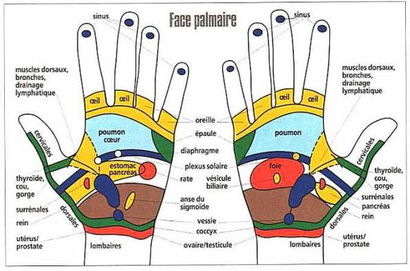 La réflexologie palmaire