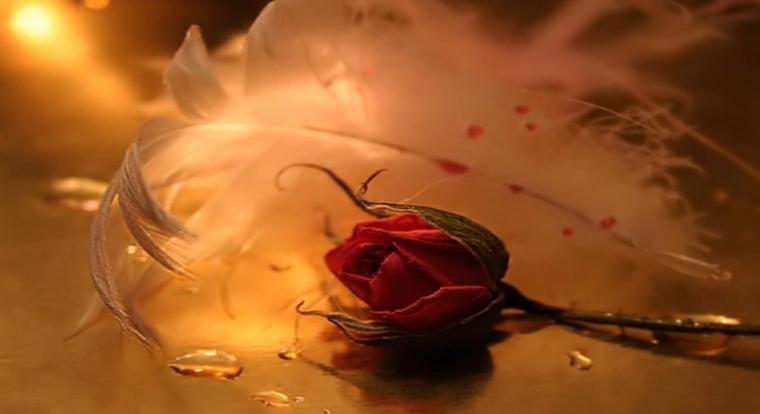 rosa nel buio