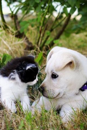 petits et mimi