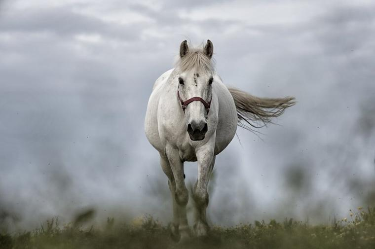 cheval beauté et douceur  !!