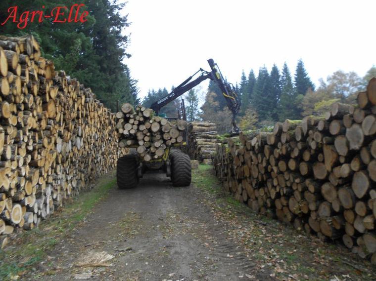 Chantier de bois