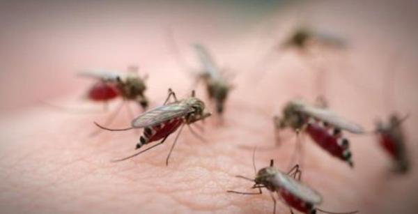 Gare aux moustiques tigres