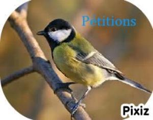 Articles spécial pétitions!