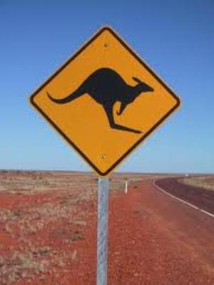 Un Kangourou en furie blesse une femme