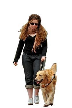 Etudes et formations des métiers qui ont du chien!