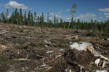 Greenpeace lutte contre la déforestation!( coup de coeur pour la vidéo!)