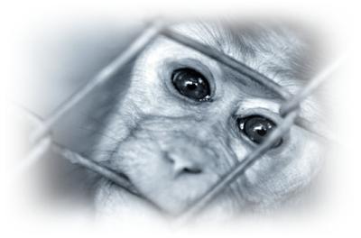 Recherche scientifique : Avec ou SANS animaux ?