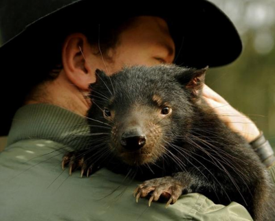 Diable de Tasmanie : Mission de sauvetage