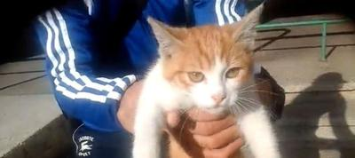 Pour avoir pris un chaton pour une balle! 1 an de prison ferme pour Farid Ghilas (Tant mieux!)