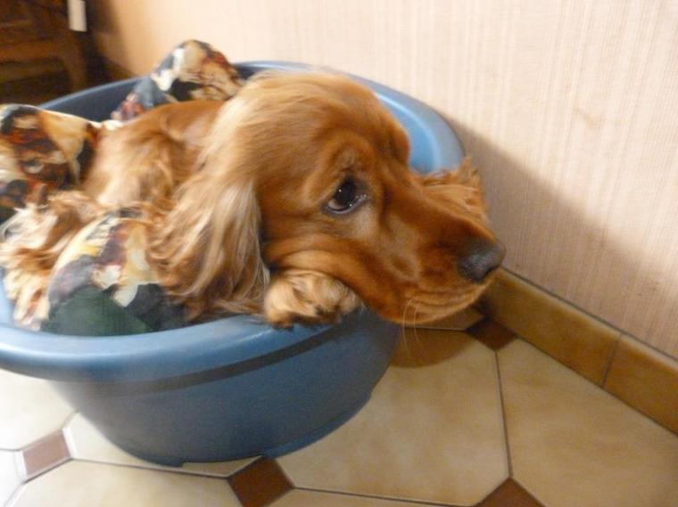 Voici  des photos de moi et mon chien : Gary <3