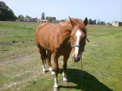 vote des chevaux et jument (voir article precedent)
