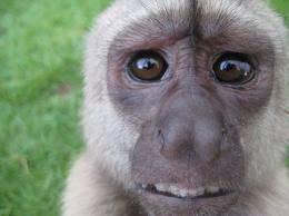 pour mon petit singe adoré