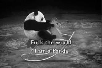 Nous sommes des pandas déguisés en koala pour pouvoir regarder les barbapapas.