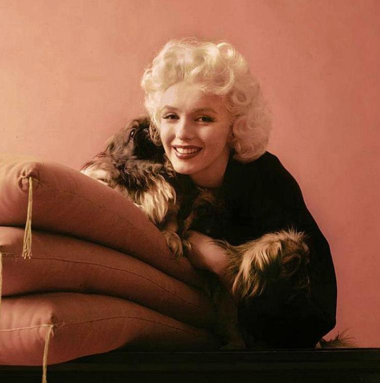 1953 / by Milton GREENE... Marilyn au pékinois