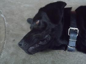 un chien extraordinaire