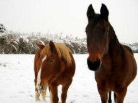 Lara & Mustang, Pueblo, Dellonte