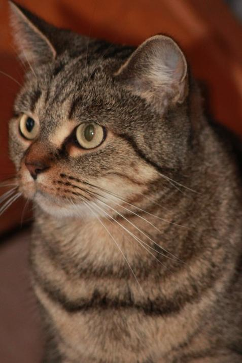 ♥♥♥  La plus belle des petite chattes <3<3<3