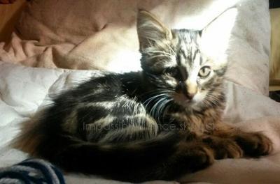 Mon petit chaton; Loka