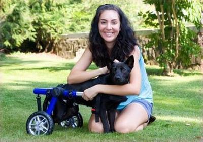 Des animaux handicapés mais avec l'envie de vivre !