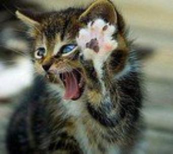 ptit chat en colère